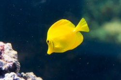 A fish shaped blob of yellow