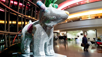 Lights of the Sage make Disco Dog's dancefloor