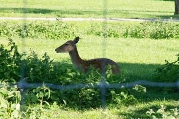 The deer enclosure at Greenwich Park