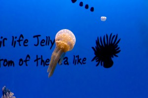 A jellyfish floats by, with writing behind