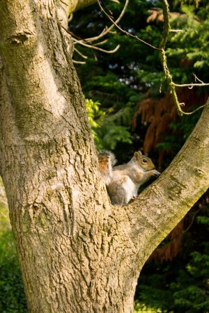 The one friendly squirrel enjoys its nut