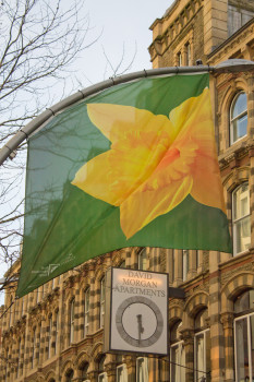 When not flying Welsh flags they fly daffodils